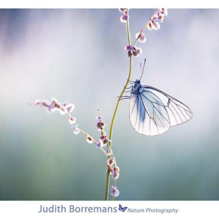 Macrofotografie – Licht En Compositie