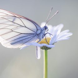 Vlinders fotograferen in Viroinval - 1-persoonskamer met eigen badkamer juni 2022