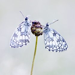 Vlinders fotograferen in Viroinval - 1-persoonskamer met eigen badkamer juli 2021