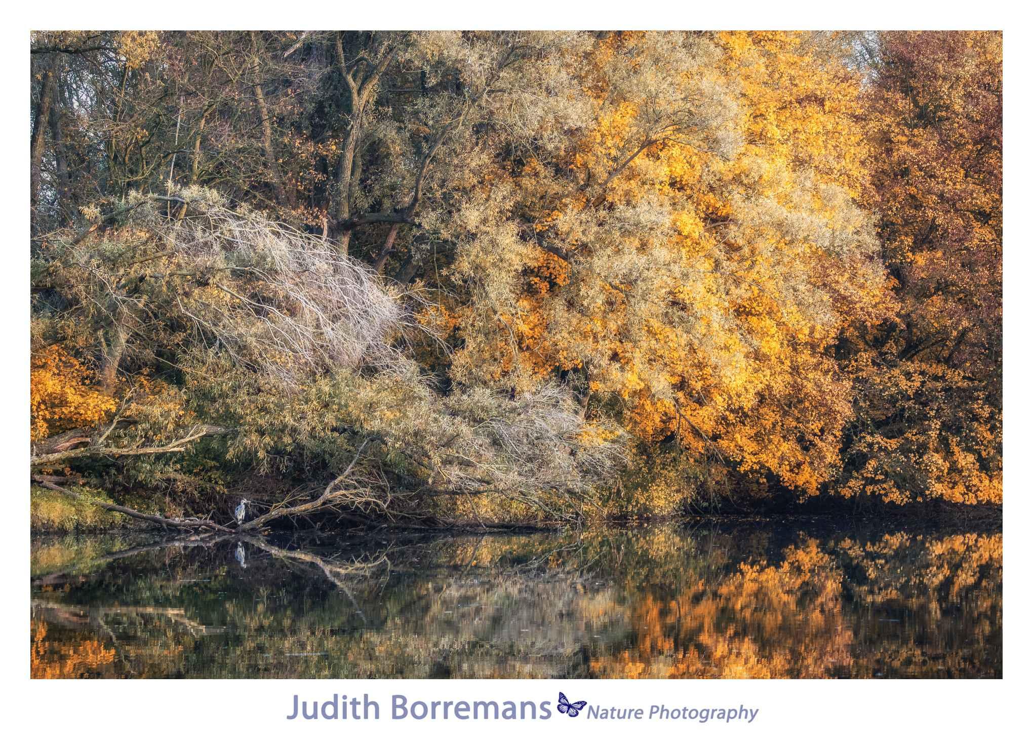 Herfst In De Brabantse Biesbosch Met JBN Sloep