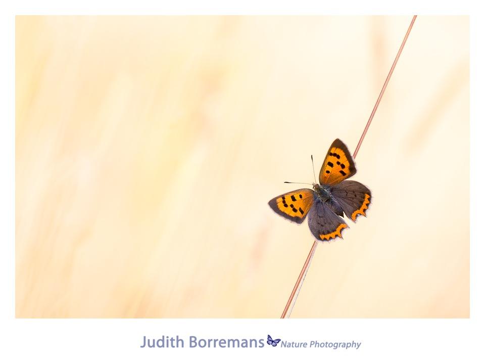Vlinderen In Zeeland 2016