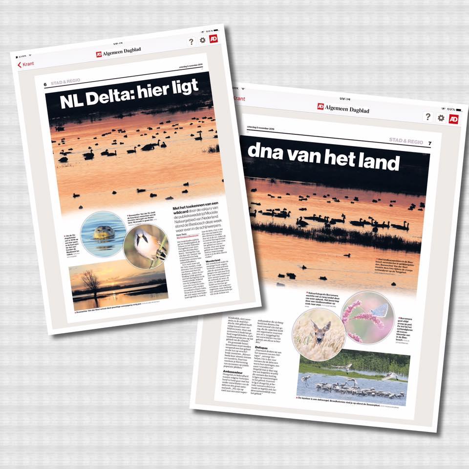 05-11-2016 Artikel In Dagblad AD Over Biesbosch Met 2 Fotos Van Mij (ree En Vlinder)