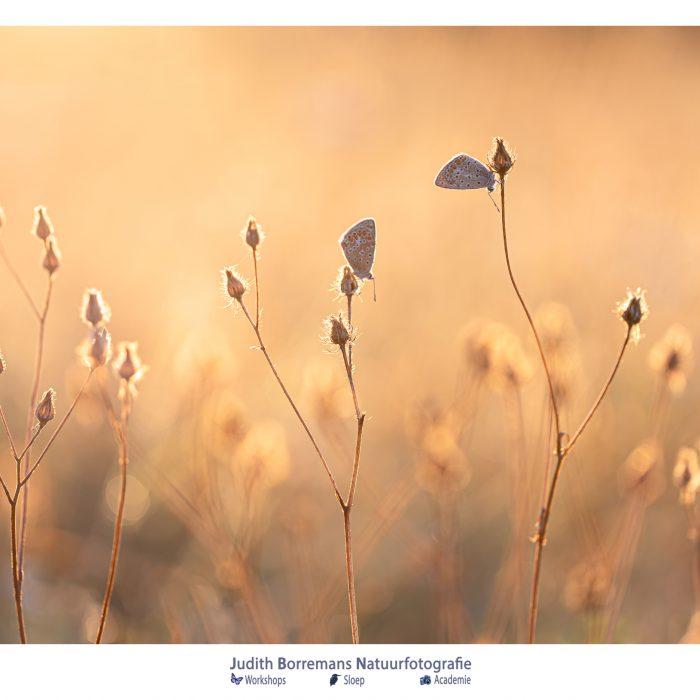 Weekend! Enjoy Nature (week 37_2020)