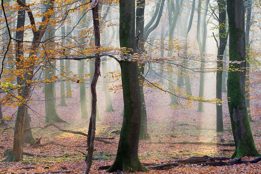 Herfst Speulderbos